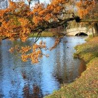 осень в Царском Селе. :: Татьяна Тимохина