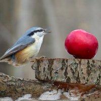 Ооо, красивое яблоко ! :: Ната Волга