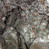 Снежок :: Шура Еремеева