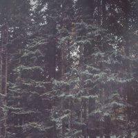 письма в осень :: ufoto16©photography ufoto16©photography