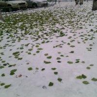 Листики на снегу. :: Ольга Кривых