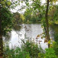 Вид на парковое озеро в начале октября :: Маргарита Батырева