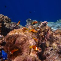 Подводный мир Индийского океана :: Павел Катков