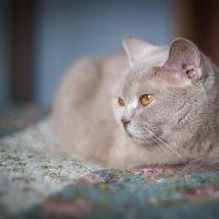 CAT :: Олег Дорошенко