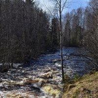 Карелия. Река Саркойоки. Бурная весна. :: Владимир Ильич Батарин