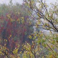 Осенний ливень. :: Mihail Mihaylov