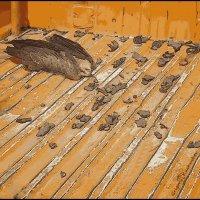 Раненая птица :: Григорий Кучушев
