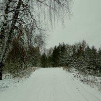 первый снег... :: александр дмитриев
