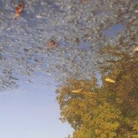Осень :: Мария Драницына