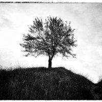Осень :: Виктор Журбенков