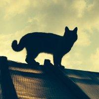 Соседский кот :: Настя Рововых