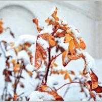 Первый снег :: Марина Никулина