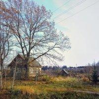 поздняя осень :: Наталья Ерёменко