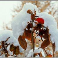 Первый снег. :: Марина Никулина