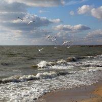 Ноябрьское море :: Нилла Шарафан