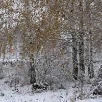 Осенний снег :: галина северинова