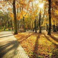 Золото парка Jakobsruhe :: Игорь Вишняков