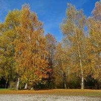 Это осень золотая Дарит листья, не считая.... :: Galina Dzubina