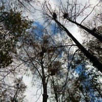 Осеннее небо :: Владимир Самойлов