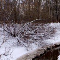 зимний лес :: Наталья Сазонова