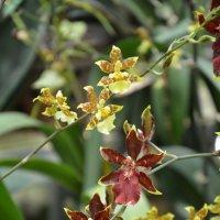 Сад орхидей. :: Paparazzi