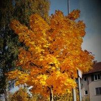золотая осень :: kuta75 оля оля