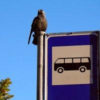 опаздывает что-то... :: linnud