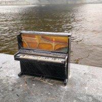 Зимняя музыка :: sergey shishkov