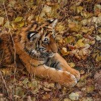 Осенняя меланхолия :: Nyusha