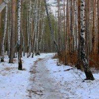Первый снег :: Александр Садовский