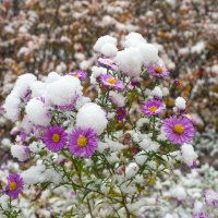 Снег в октябре 26 :: Виталий
