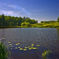 На озере Усовье :: Александр Березуцкий (nevant60)