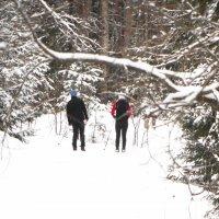 начало лыжного сезона :: Михаил Жуковский