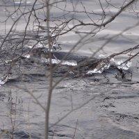 ледяные серьги :: Михаил Жуковский
