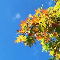 Расцветает осень в небе голубом! :: Наталья