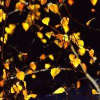 Осенний  ситцевый бал... :: Валерия  Полещикова