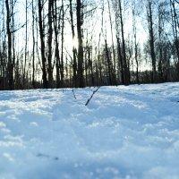 Снег в лесу :: Роман Челазнов