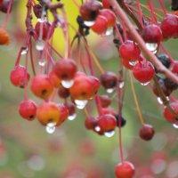 Поздняя осень. :: наталия