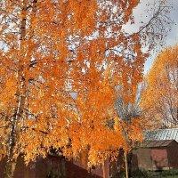 Осень во дворе моего дома :: Валерий Талашов