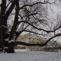 Первый снег в Павловском парке, дворец :: Vadim Odintsov