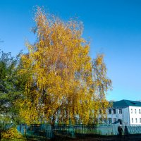 Жёлтое дерево :: Вячеслав Баширов