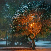 Зимнее солнышко :: Olesia Kasabova