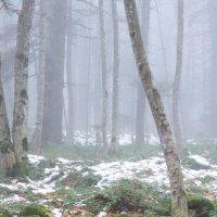 Туман :: Serega Денисенко