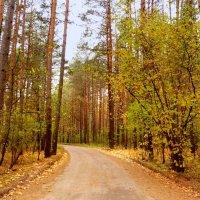 лесная дорога :: Александр Прокудин