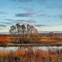 Поздняя осень :: Лара Симонова