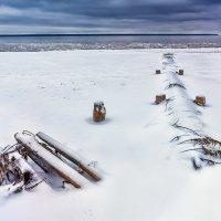 На холодных берегах :: Алексей Дмитриев