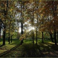 Муринский парк :: Вера