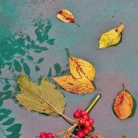 Осень приходит тихо . :: Святец Вячеслав