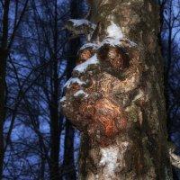 Лесной Страж. :: Va-Dim ...