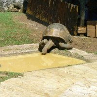 Большая черепаха :: Ольга Васильева